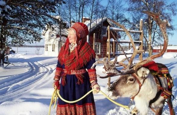 Lapland Finland Reindeer