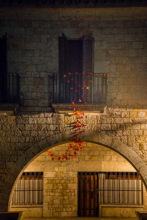 Girona Butterflies