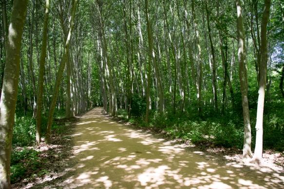 Girona Greenway