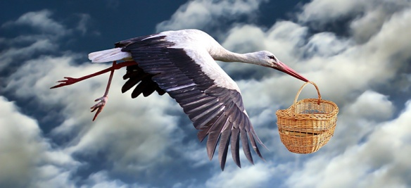 Stork Delivery 2